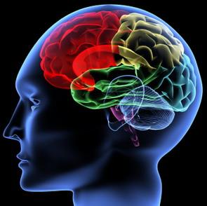 brain1-re